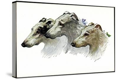 Künstler Jos. Gaber, Drei Windhunde, Schnauzen, Schleifen--Stretched Canvas Print