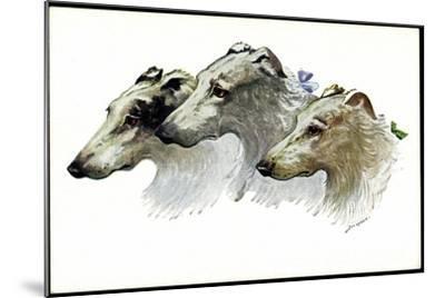 Künstler Jos. Gaber, Drei Windhunde, Schnauzen, Schleifen--Mounted Giclee Print