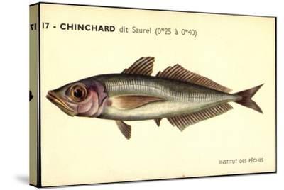 Künstler Fische, Institut Des Peches, Chinchard Dit Saurel--Stretched Canvas Print