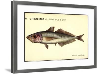 Künstler Fische, Institut Des Peches, Chinchard Dit Saurel--Framed Giclee Print