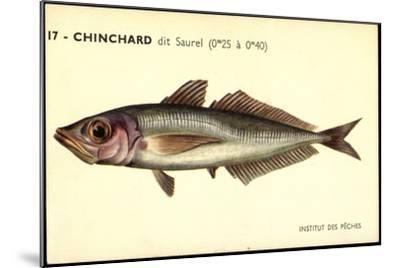 Künstler Fische, Institut Des Peches, Chinchard Dit Saurel--Mounted Giclee Print