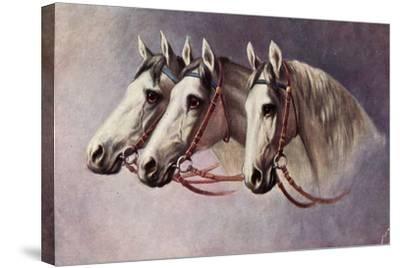 Pferd, Drei Schimmel Aus Dem Seitenprofil Mit Geschirr--Stretched Canvas Print