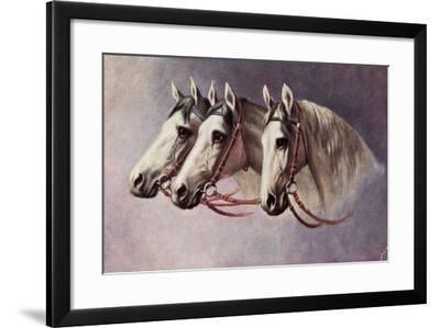 Pferd, Drei Schimmel Aus Dem Seitenprofil Mit Geschirr--Framed Giclee Print