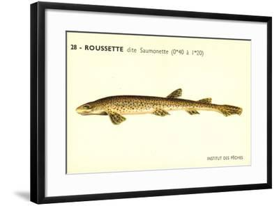 Künstler Fische, Institut Des Peches, Roussette Dite Saumonette--Framed Giclee Print