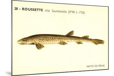 Künstler Fische, Institut Des Peches, Roussette Dite Saumonette--Mounted Giclee Print