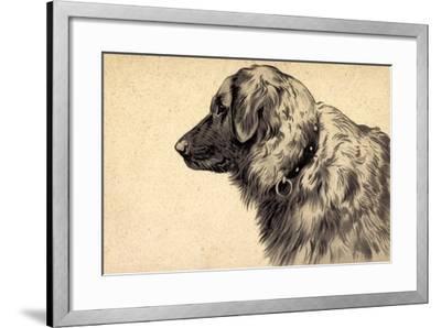 Präge Hund, Seitenprofil Mit Hundehalsband--Framed Giclee Print