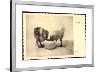 Frohe Ostern, Küken Trinken Aus Wasserschale, Amag--Framed Giclee Print