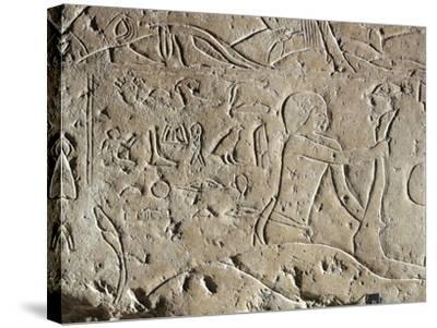 Detail of Ancient Egyptian Limestone Relief Depicting Butchering of Bull, Old Kingdom--Stretched Canvas Print