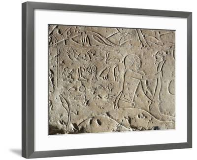 Detail of Ancient Egyptian Limestone Relief Depicting Butchering of Bull, Old Kingdom--Framed Giclee Print
