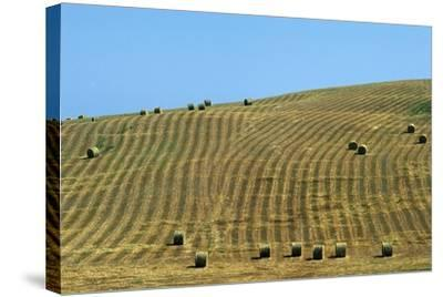 Italy, Tuscany, Val D'Orcia Natural Park, Rural Landscape--Stretched Canvas Print