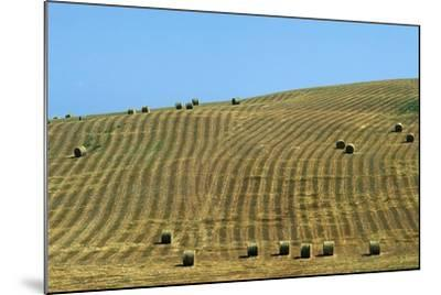 Italy, Tuscany, Val D'Orcia Natural Park, Rural Landscape--Mounted Giclee Print