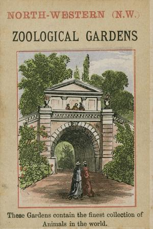 Zoological Gardens--Stretched Canvas Print