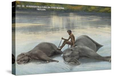Elephants Lying in the Water, Ceylon--Stretched Canvas Print