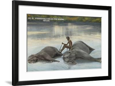 Elephants Lying in the Water, Ceylon--Framed Photographic Print