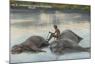 Elephants Lying in the Water, Ceylon--Mounted Photographic Print