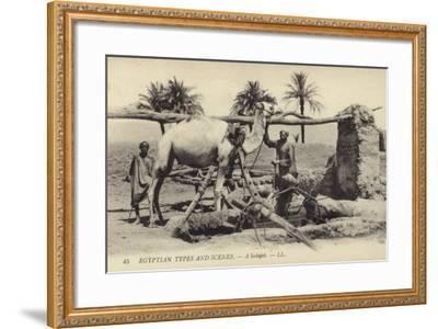 A Sakijeh--Framed Photographic Print