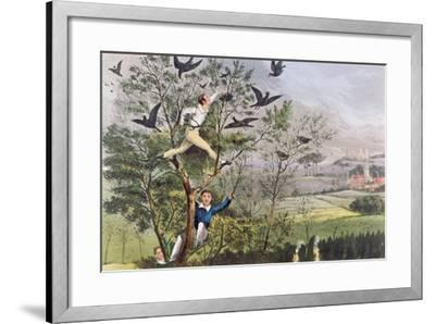 "Who-Whoop! I'Ve Done it - Raiding the Rookery from Nimrod's ""The Life of a Sportsman, 1874""--Framed Giclee Print"