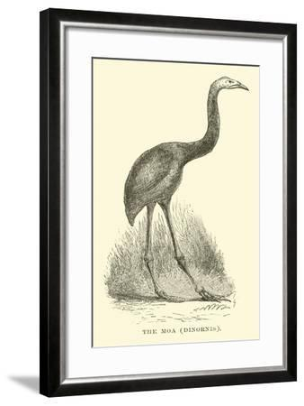 The Moa, Dinornis--Framed Giclee Print