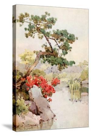 Azalea and Pine-Tree-Ella Du Cane-Stretched Canvas Print