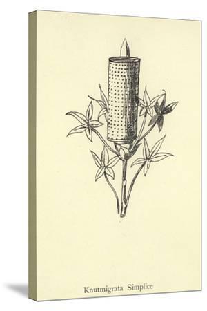 Knutmigrata Simplice-Edward Lear-Stretched Canvas Print