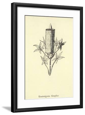 Knutmigrata Simplice-Edward Lear-Framed Giclee Print
