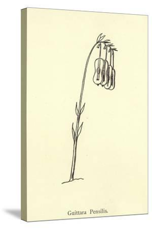 Guittara Pensilis-Edward Lear-Stretched Canvas Print