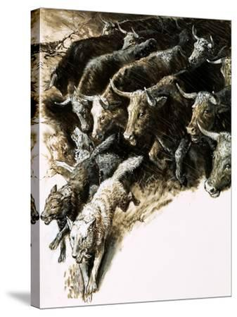 Wolves Caught Up in a Stampede--Stretched Canvas Print