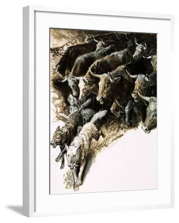 Wolves Caught Up in a Stampede--Framed Giclee Print