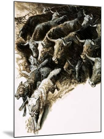 Wolves Caught Up in a Stampede--Mounted Giclee Print