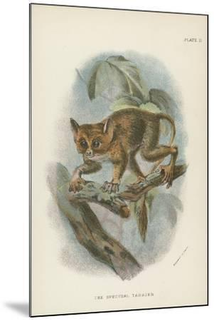 The Spectral Tarsier--Mounted Giclee Print