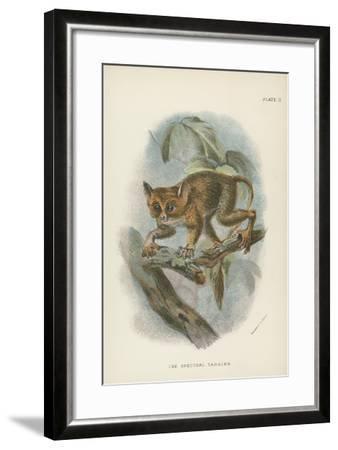 The Spectral Tarsier--Framed Giclee Print