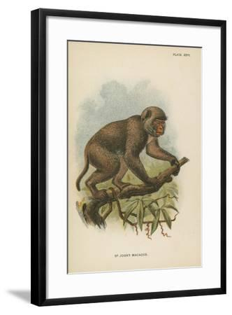 St. John's Macaque--Framed Giclee Print