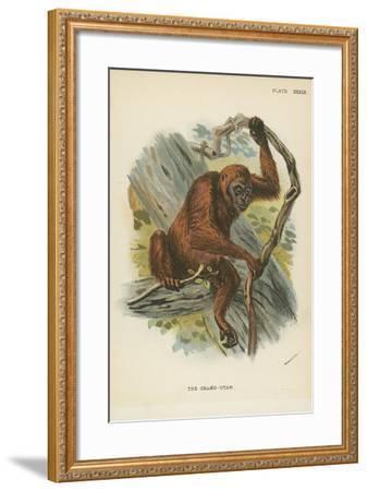 The Orang-Utan--Framed Giclee Print