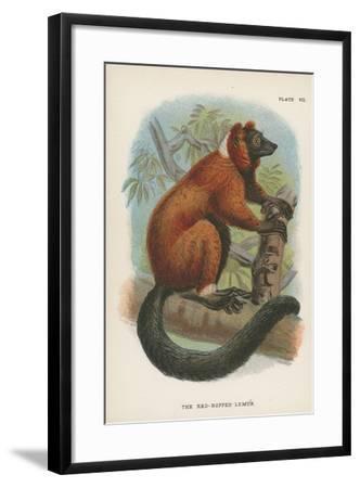 The Red-Ruffed Lemur--Framed Giclee Print