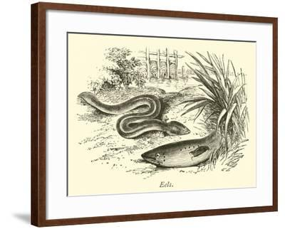 Eels--Framed Giclee Print