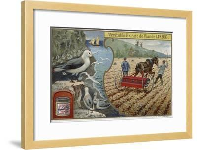 Liebig Card Featuring Seabirds--Framed Giclee Print