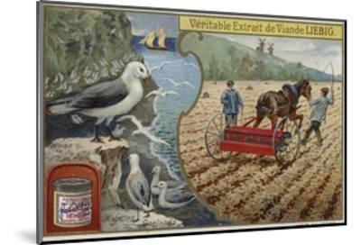 Liebig Card Featuring Seabirds--Mounted Giclee Print