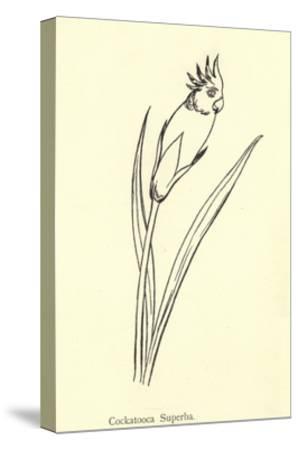 Cockatooca Superba-Edward Lear-Stretched Canvas Print
