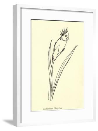 Cockatooca Superba-Edward Lear-Framed Giclee Print