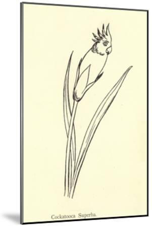 Cockatooca Superba-Edward Lear-Mounted Giclee Print
