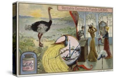 Liebig Card Featuring Images of Birds--Stretched Canvas Print