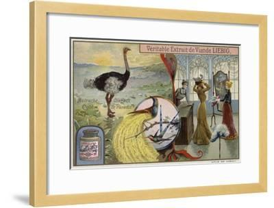 Liebig Card Featuring Images of Birds--Framed Giclee Print