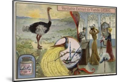 Liebig Card Featuring Images of Birds--Mounted Giclee Print