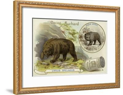 Cave Bear and Brown Bear--Framed Giclee Print