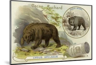 Cave Bear and Brown Bear--Mounted Giclee Print