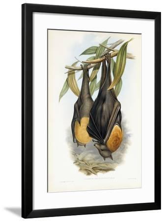 Grey-Headed Flying Fox-John Gould-Framed Giclee Print