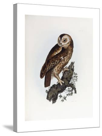 Tawny Owl, 1841-Prideaux John Selby-Stretched Canvas Print