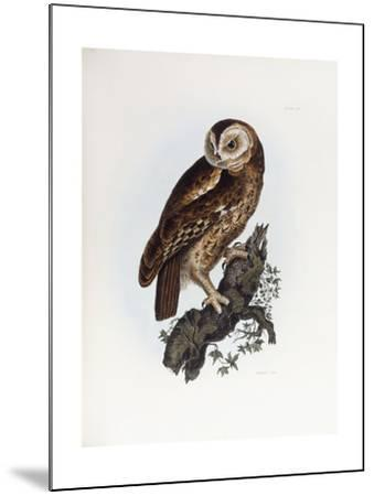 Tawny Owl, 1841-Prideaux John Selby-Mounted Giclee Print