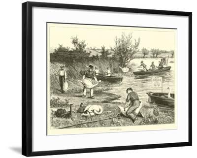 Swan-Upping--Framed Giclee Print