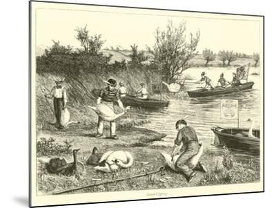 Swan-Upping--Mounted Giclee Print